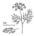 ink dill hand drawn sketch vector image vector image