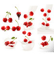 set of ripe sweet cherries with leaves and splash vector image vector image