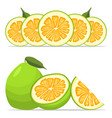 the green pomelo vector image vector image