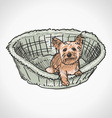 Yorkshire Terrier in Basket vector image vector image