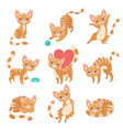 cute funny red cat character in various poses and vector image