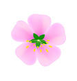 image of pink sakura flower on white vector image