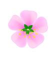 image of pink sakura flower on white vector image vector image