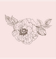 wild rose blossom branch isolated on pink vintage vector image