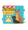 pet shop accessories icons vector image vector image