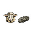 sketch cartoon sheep head cutted wool set vector image vector image