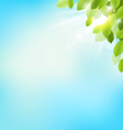 Tree foliage with sunlight on sky Floral nature vector image vector image