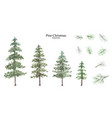 conifer and pine branches watercolor isolated set vector image