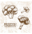digital broccoli hand drawn vector image vector image