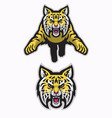 wildcats mascot attacking in american sport vector image