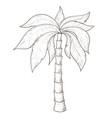 palm tree hand drawn sketch vector image vector image