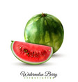 watermelon realistic image vector image