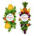 fruins harvest icons garden natural vegan food vector image vector image