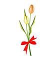 lovely two fresh tulips with red ribbon vector image vector image