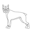 boxer single icon in outline styleboxer vector image vector image