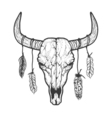 Bull skull with feathers native Americans tribal vector image