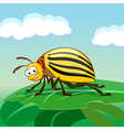 Cartoon colorado potato beetle vector image vector image
