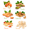 collection of ripe nuts vector image