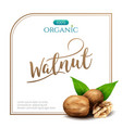 frame realistic walnut with leaves isolated on vector image vector image