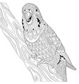 budgie parrot adult coloring page vector image vector image