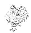 Lunar New Year greeting card design Cock sketch vector image vector image