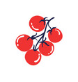 ripe tomatoes on a branch hand drawn vector image