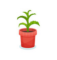 aloe indoor house plant in a pot element for vector image vector image