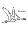pteranodon dinosaur sketch or vector image vector image