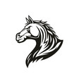 stallion head equestrian sport symbol isolated vector image
