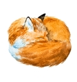 Watercolor sleeping fox vector image