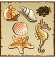 Decor of seashells and seaweed six icons vector image vector image