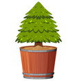 a pine tree in pot vector image vector image