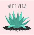 cute with cartoon aloe vera isolated vector image