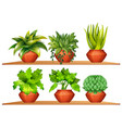 different types of plants in pots vector image vector image