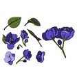 pansy or heartsease or viola flower vector image vector image
