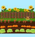 pumpkin harvest garden countryside vector image vector image