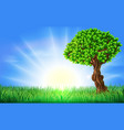 sunny field tree background vector image vector image