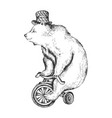 bear on bicycle sketch engraving style vector image vector image
