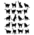 Cat Silhouettes vector image vector image