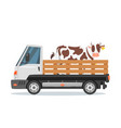 farmers car truck carrying cow vector image vector image