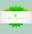 Green leaf with paper background vector image