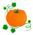 pumpkin with leaves for halloween isolated on vector image