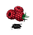 raspberry drawing isolated berry group vector image vector image
