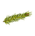 green spruce twig with cone vector image vector image