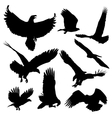 bald eagles silhouettes isolated on white