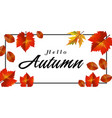 hello autumn maple square frame background vector image