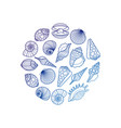sea shell round emblem vector image