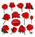 set of red rose flower blooms with green leaves
