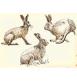 studies rabbit hare in motion vector image vector image