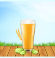 beer glass with hop plant and wheat vector image